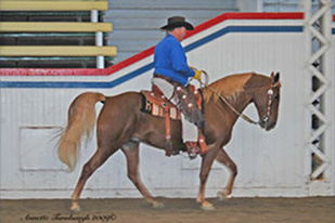NAC 2010 - An image of a Blue shirted man riding a chestnut brown horse.