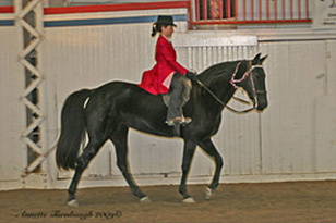 NAC 2010 - An image of a woman in a bight red riding shirt atop a large black horse.