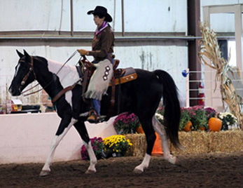 NAC 2011 - An image of a rider in brown and purple atop a white and black horse.