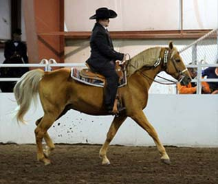 NAC 2011 - An image of a rider wearing a black suit riding on a beige horse.