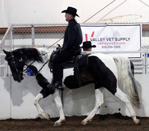 NAC 2011 - An image of a rider in black riding a black and white horse around the arena.