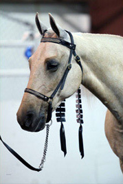 NAC 2011 - An image of a White horse with decorated tassles hanging behind their ears.