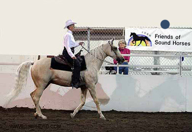 NAC 2011 - An image of a rider in white atop a white horse riding in front of a Friends of Sound Horses Banner.
