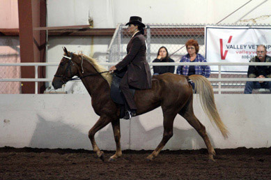 NAC 2011 - An image of a Brown horse with a brown clad rider doing a lap around the arena.