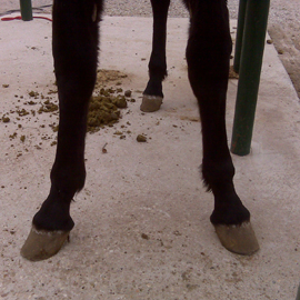 Visten's malformed front legs when he arrived in January, 2009.